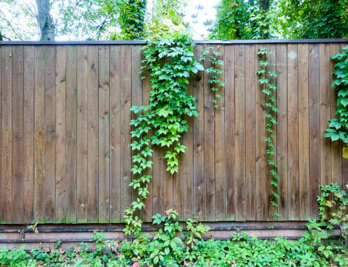 The Pros and Cons of Fence-Friendly Vines
